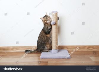 cat scratchpost
