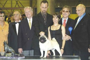 pug best in show